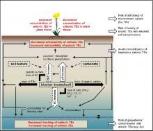A faforgács alapú bioszén hatása nyomelemekre talaj-víz-növény rendszerben