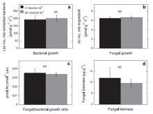 bioszén hatása a baktérium és gombanövekedésre a harmadik évben