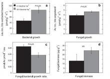 bioszén hatása a baktérium és gombanövekedésre a második évben