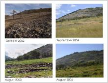 A terület növényi borítottságának változása (Palmerton Zinc Pile)
